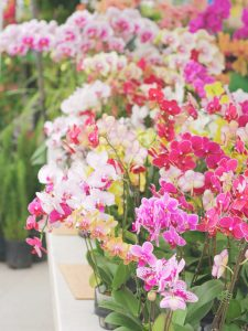 orchids at the farmers market