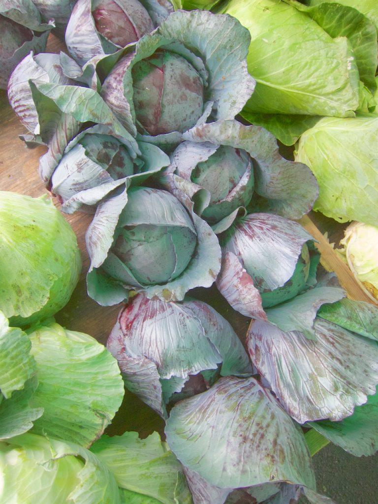 cabbage at the farmers market
